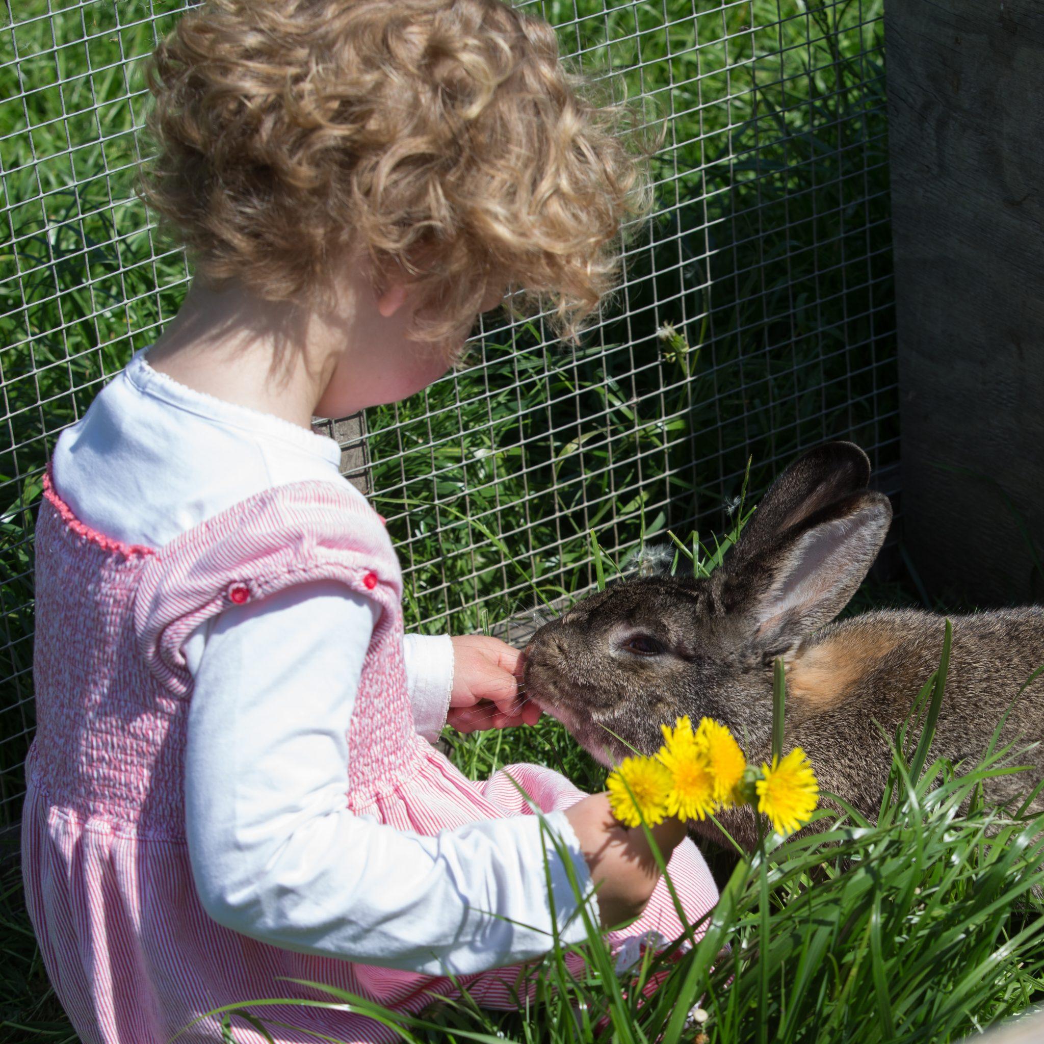 Gut Friederikenhof - die Kaninchen werden versorgt