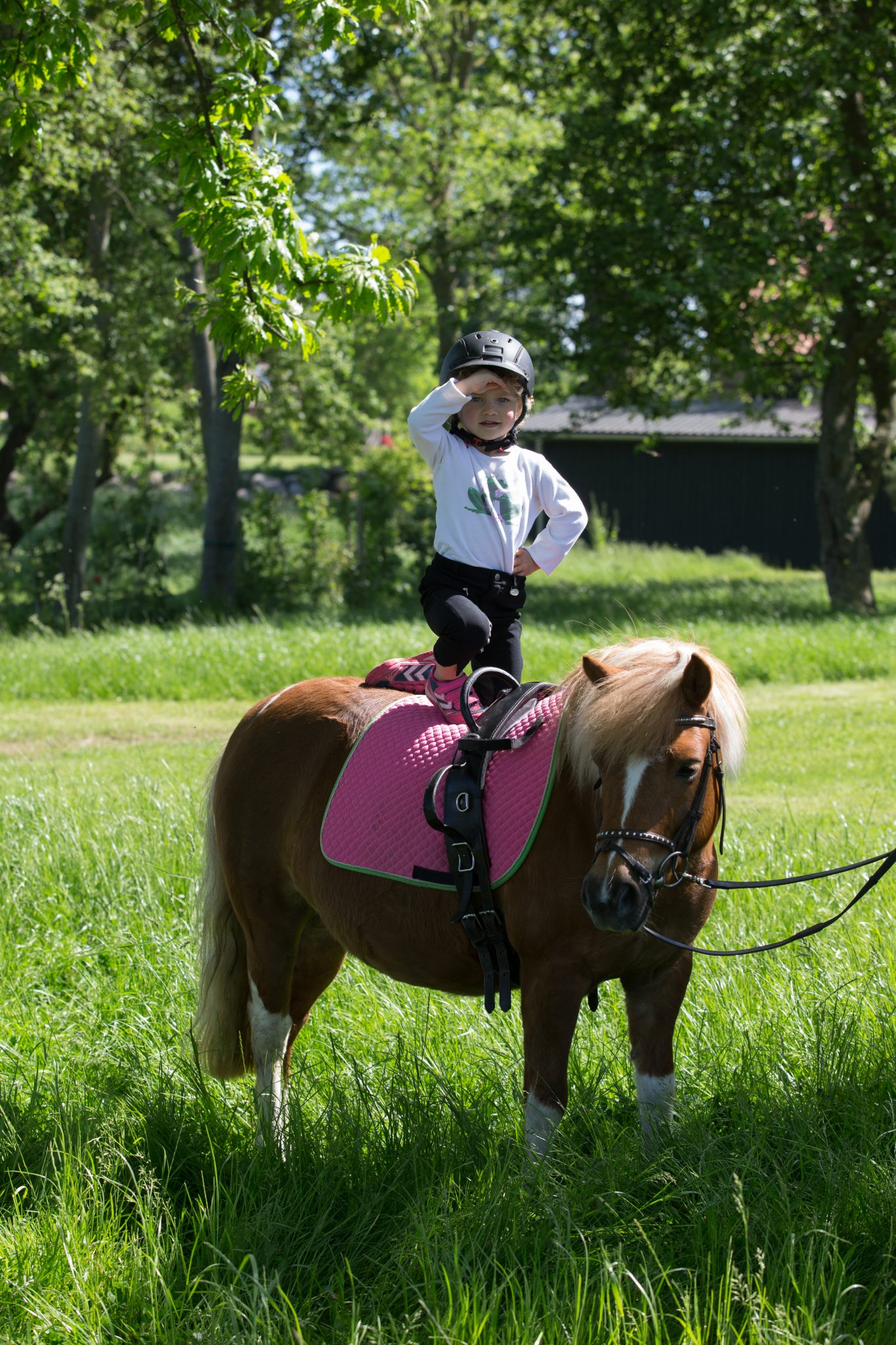 Gut Friederikenhof - guter Ausblick vom Pony