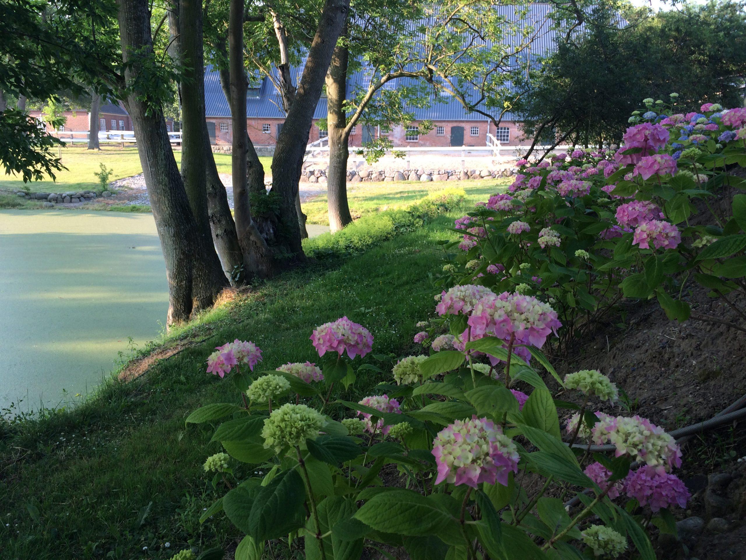 Gut Friederikenhof - schöne Blumen an unseren Teichen