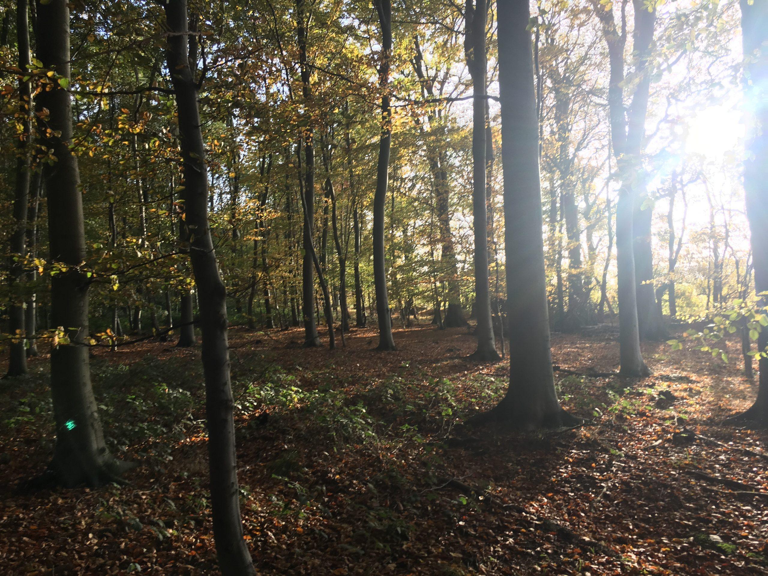 Gut Friederikenhof - der Wald mit Blick auf die Steilküste