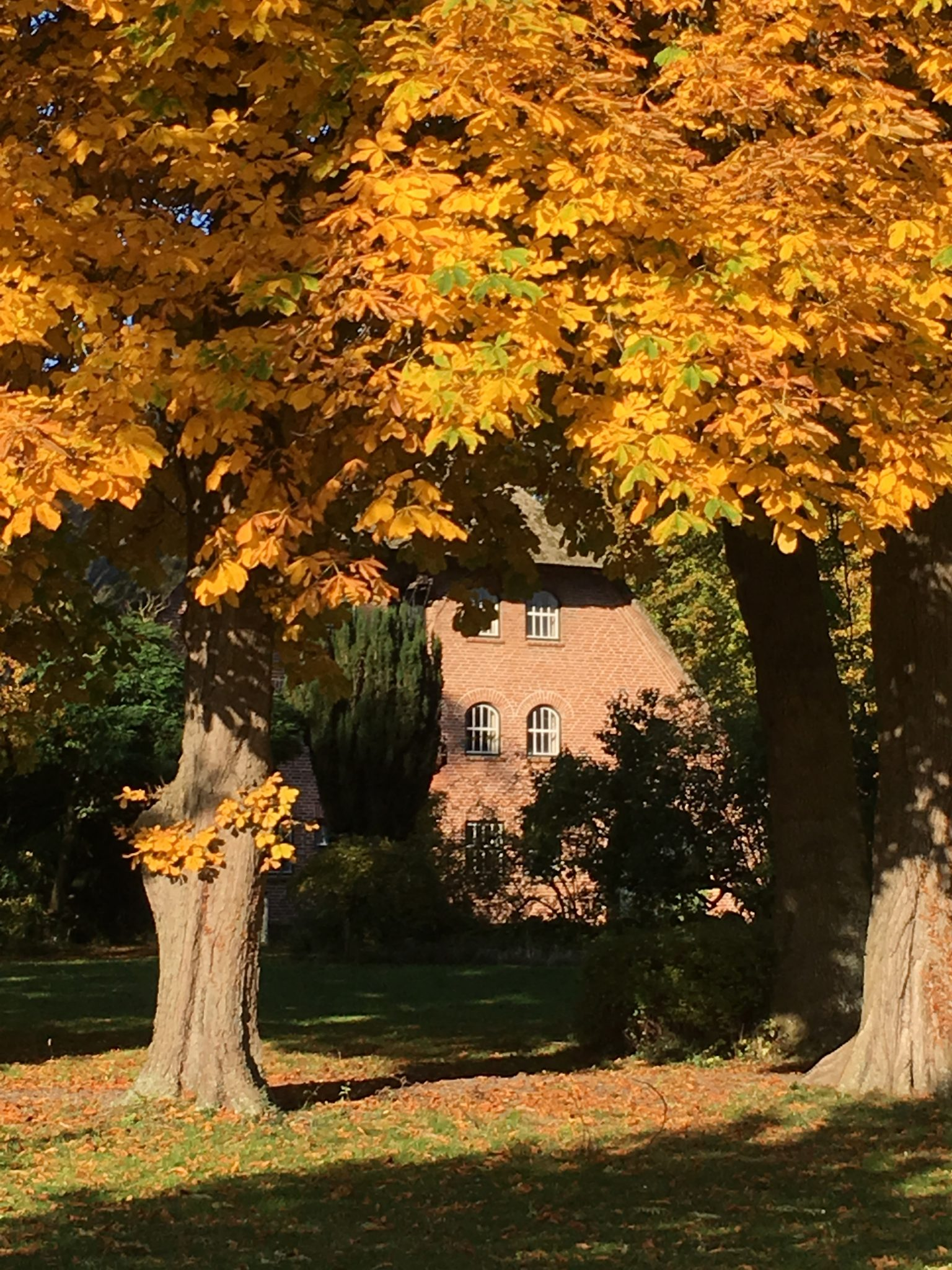 Gut Friederikenhof - goldener Herbst