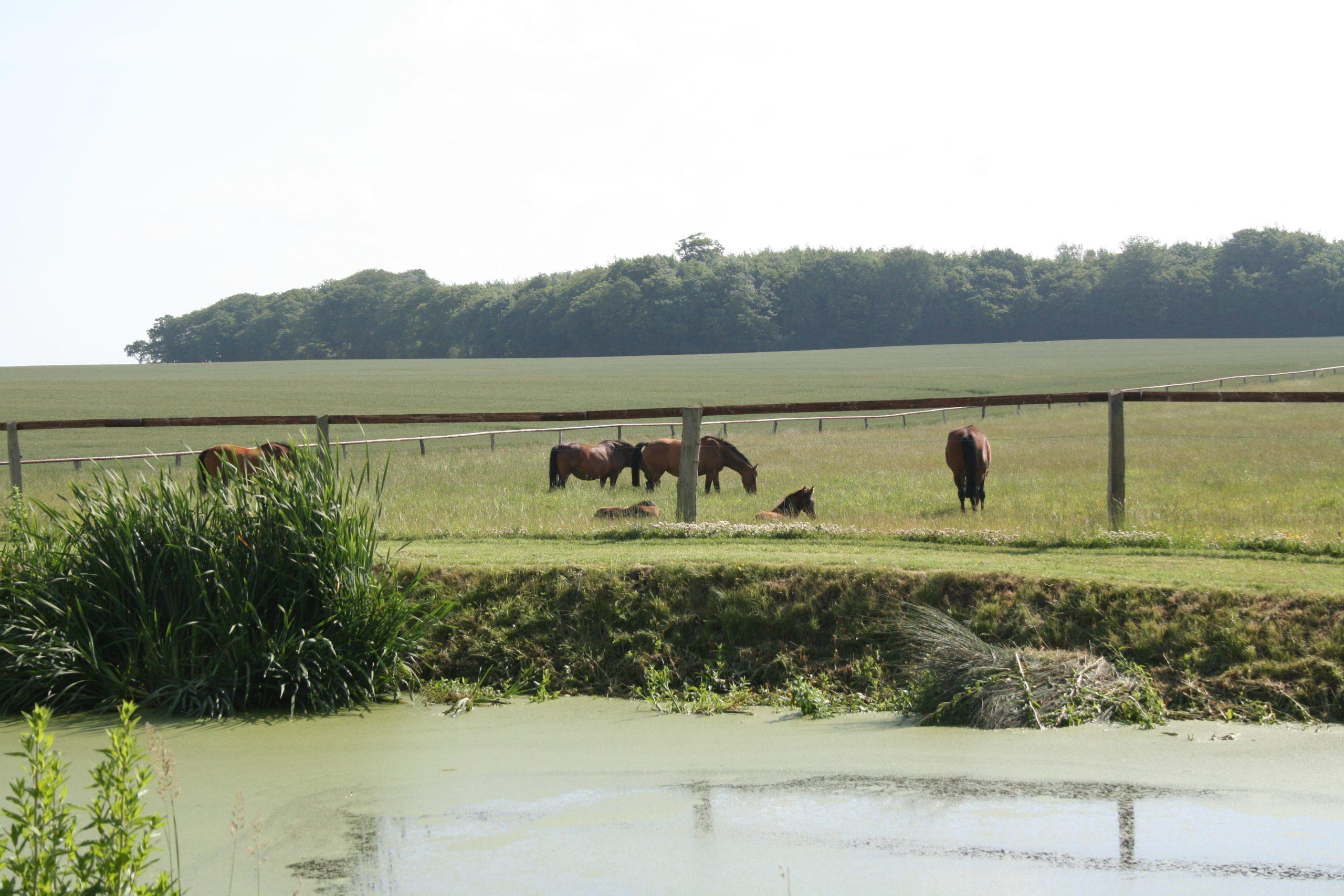 Gut Friederikenhof - Holsteiner Pferdezucht