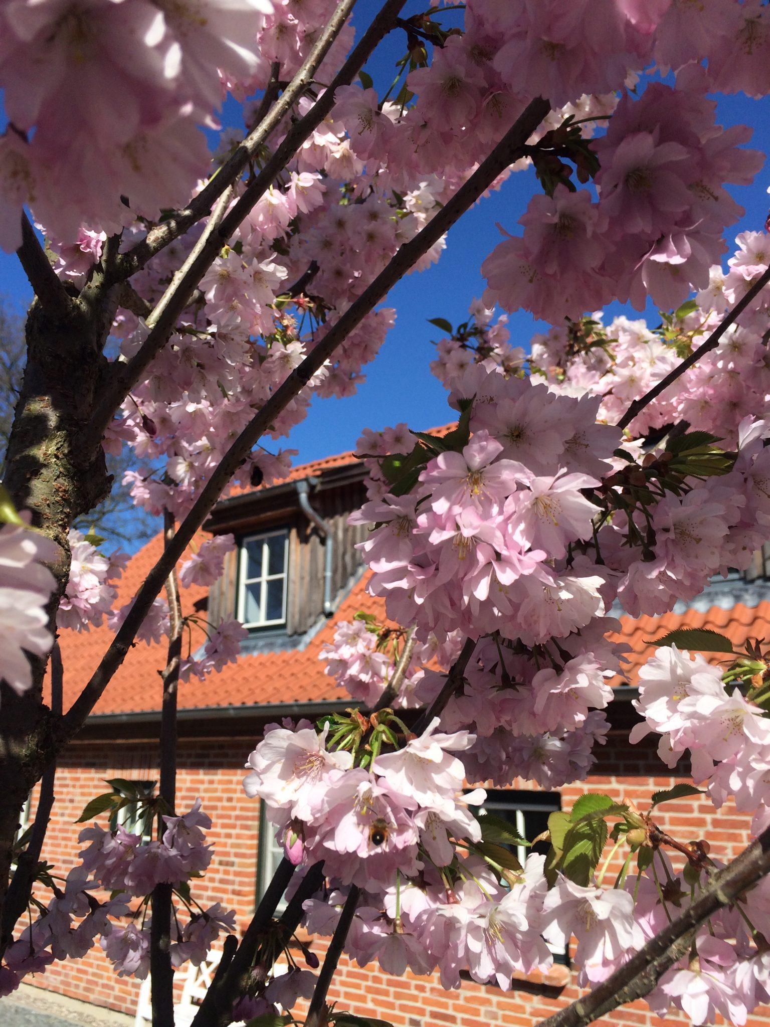 Gut Friederikenhof - rosa Blick auf die Ferienwohnungen