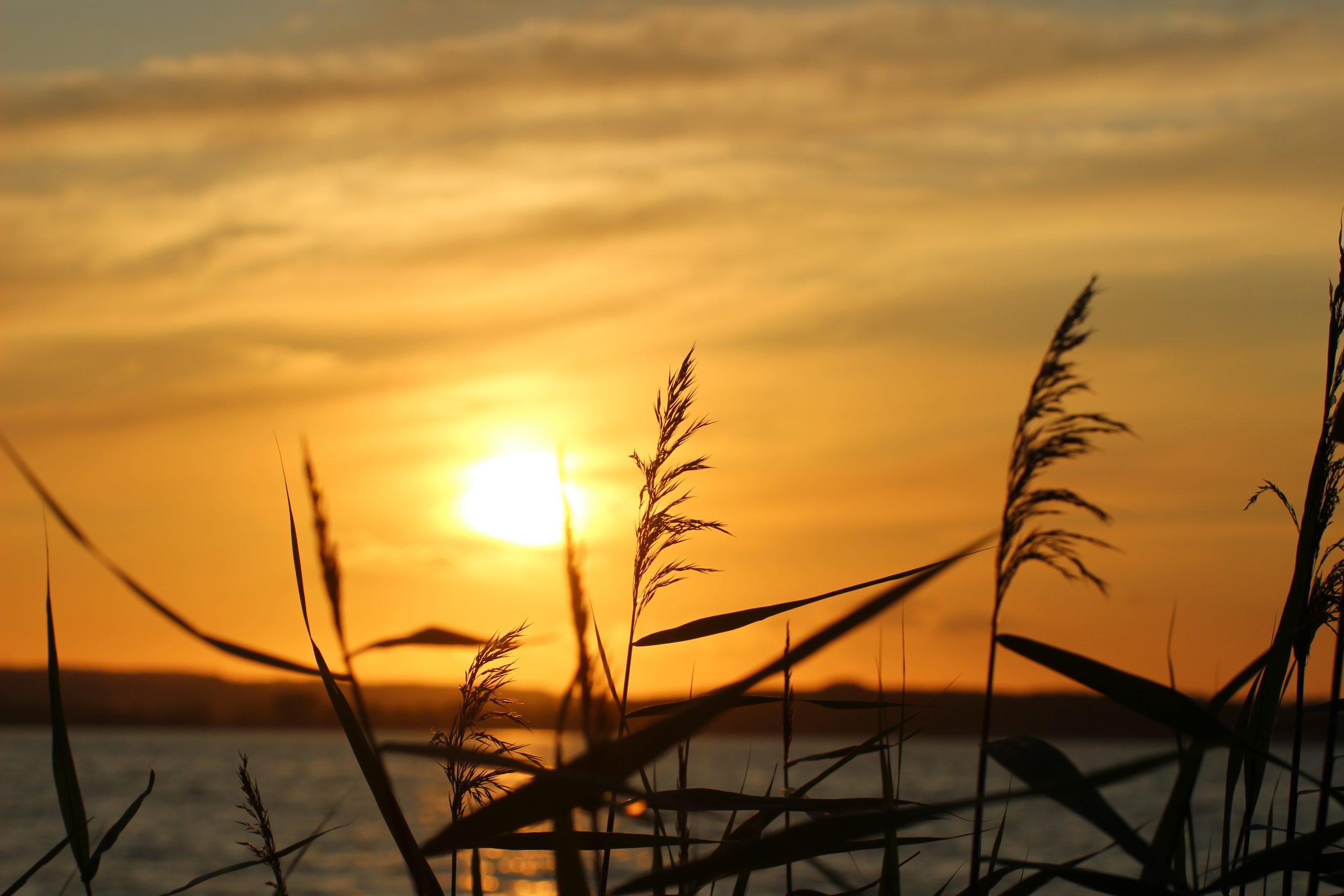 Gut Friederikenhof - Sonnenuntergang am Meer genießen