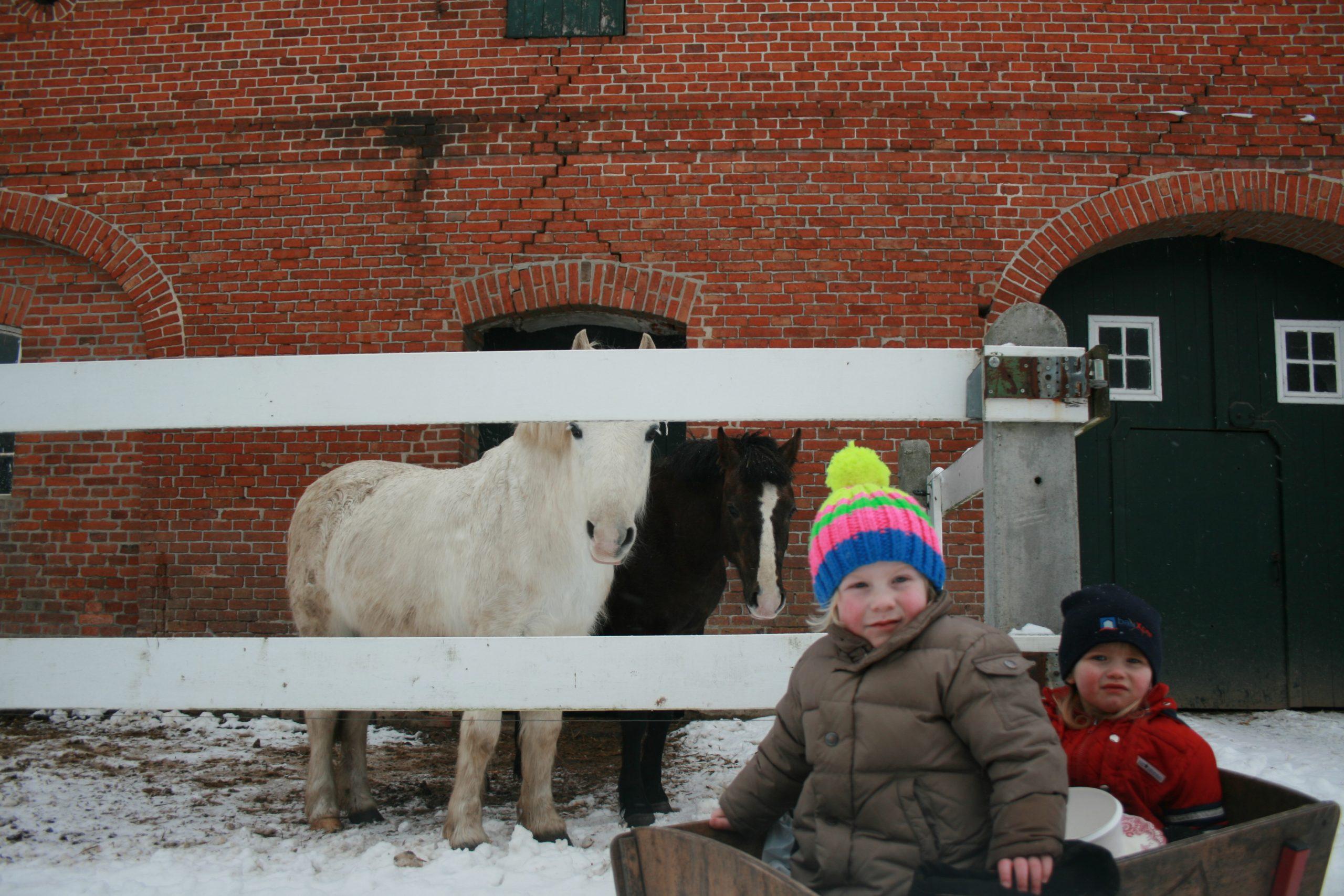 Gut Friederikenhof - die Kinder und Ponys freuen sich über den Schnee