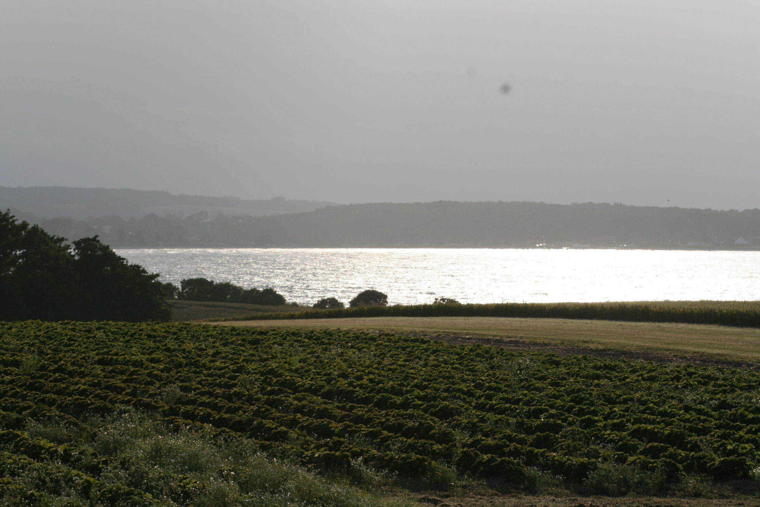 Gut Friederikenhof - Blick über die Felder auf die Ostsee