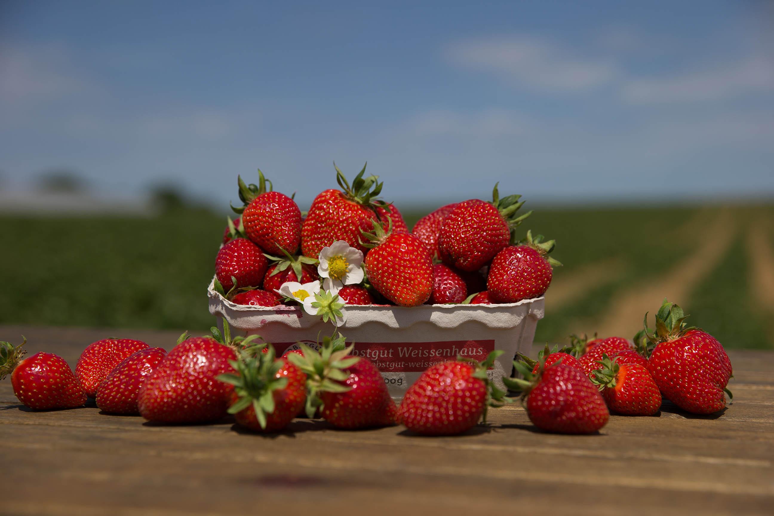 Gut Friederikenhof - Erdbeeren frisch vom Feld