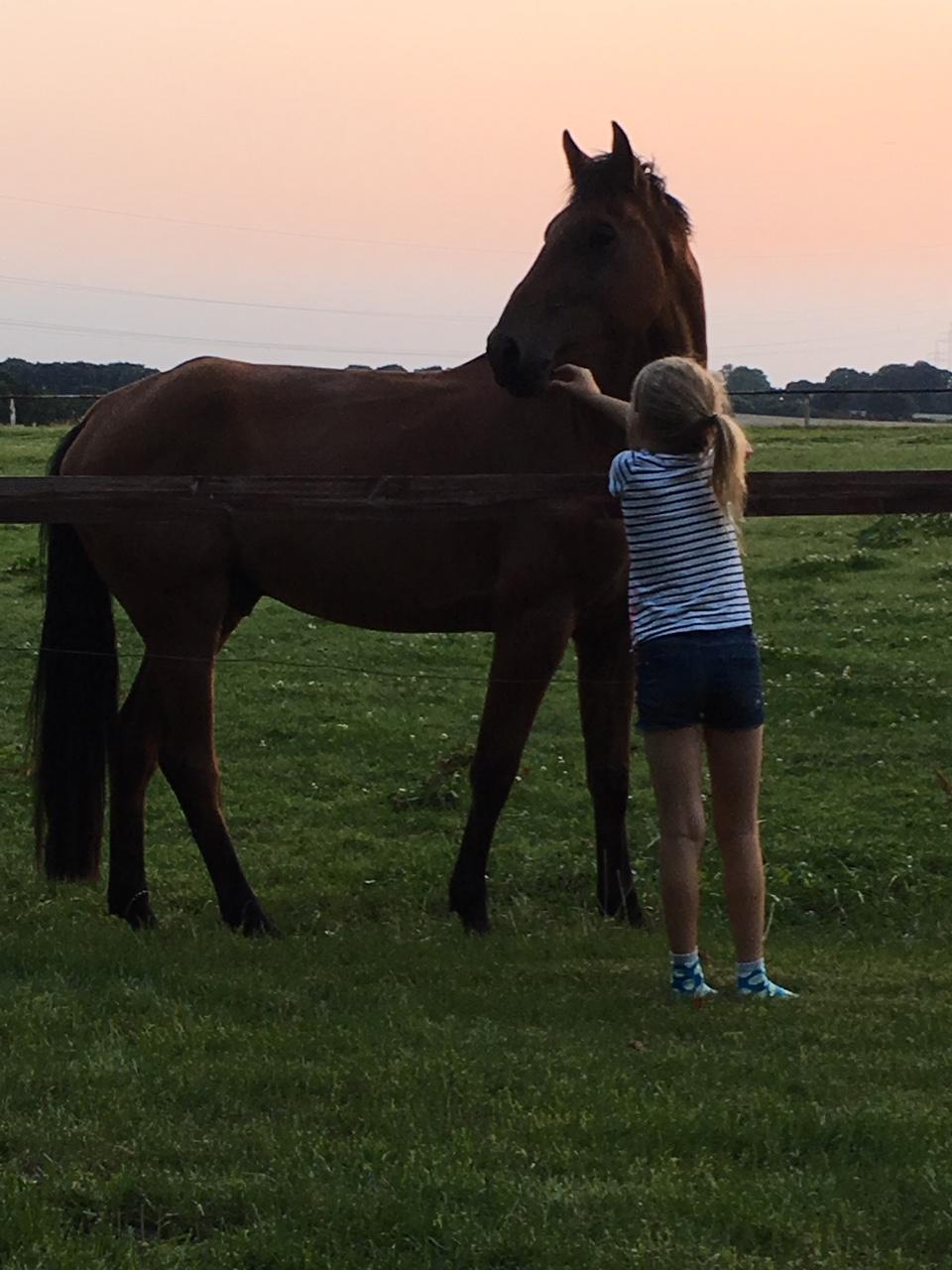 Gut Friederikenhof - Glückliche Pferde und Reiter(in)