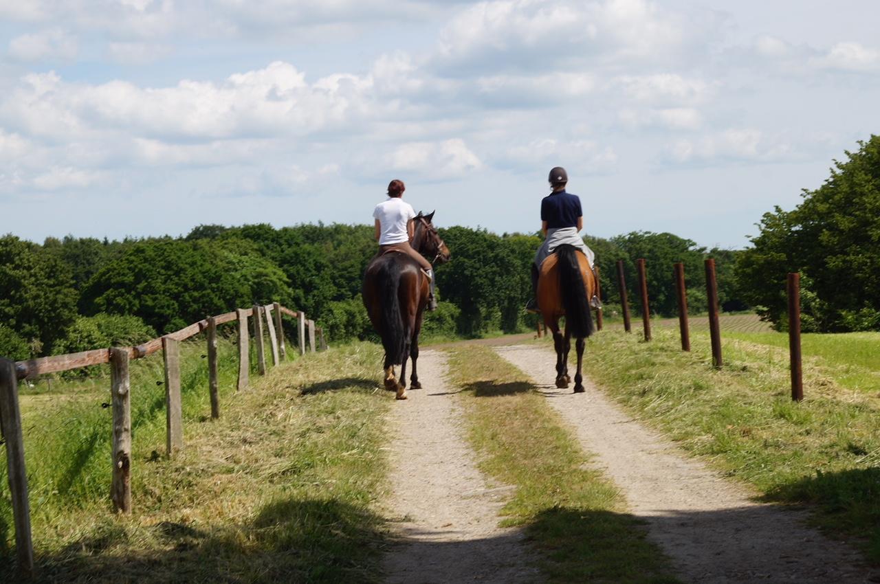 Gut Friederikenhof - mit den Pferden das Gelände erkunden