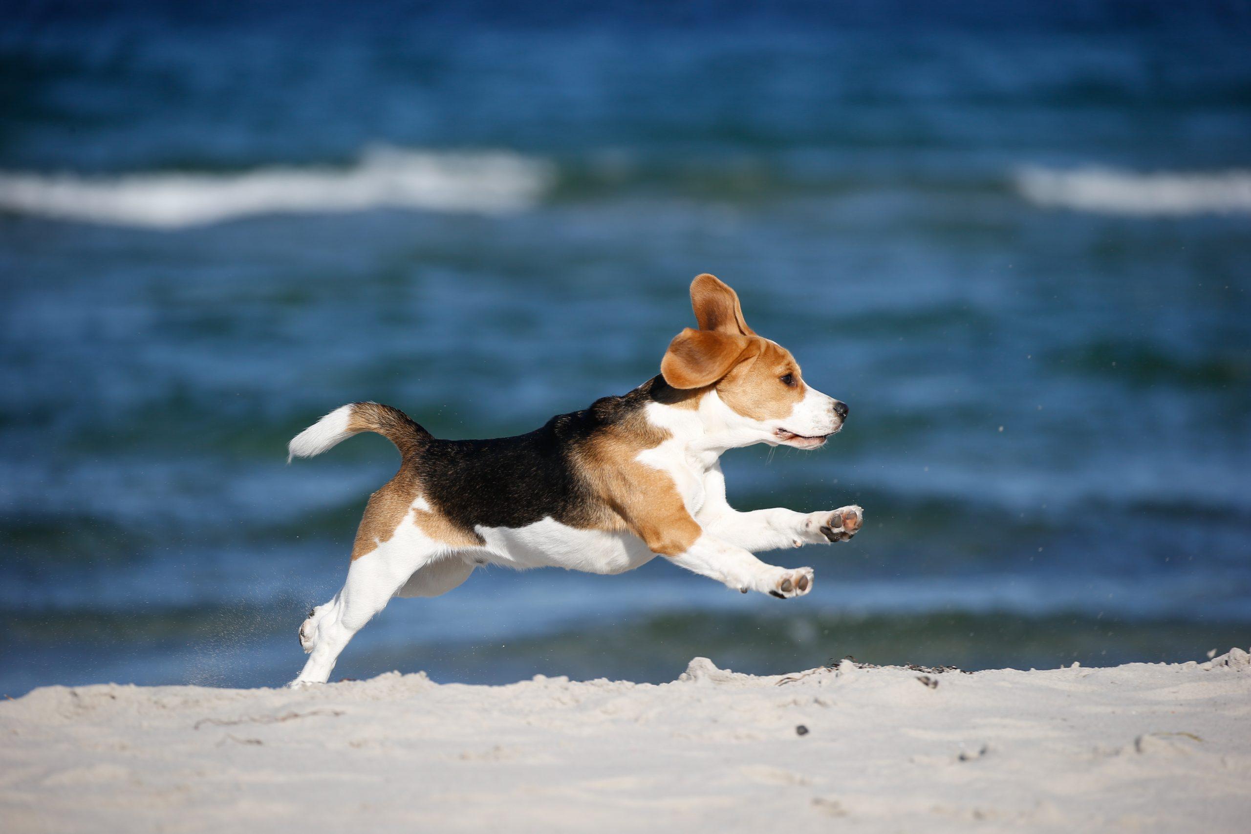 Gut Friederikenhof - die Hunde toben am Hundestrand