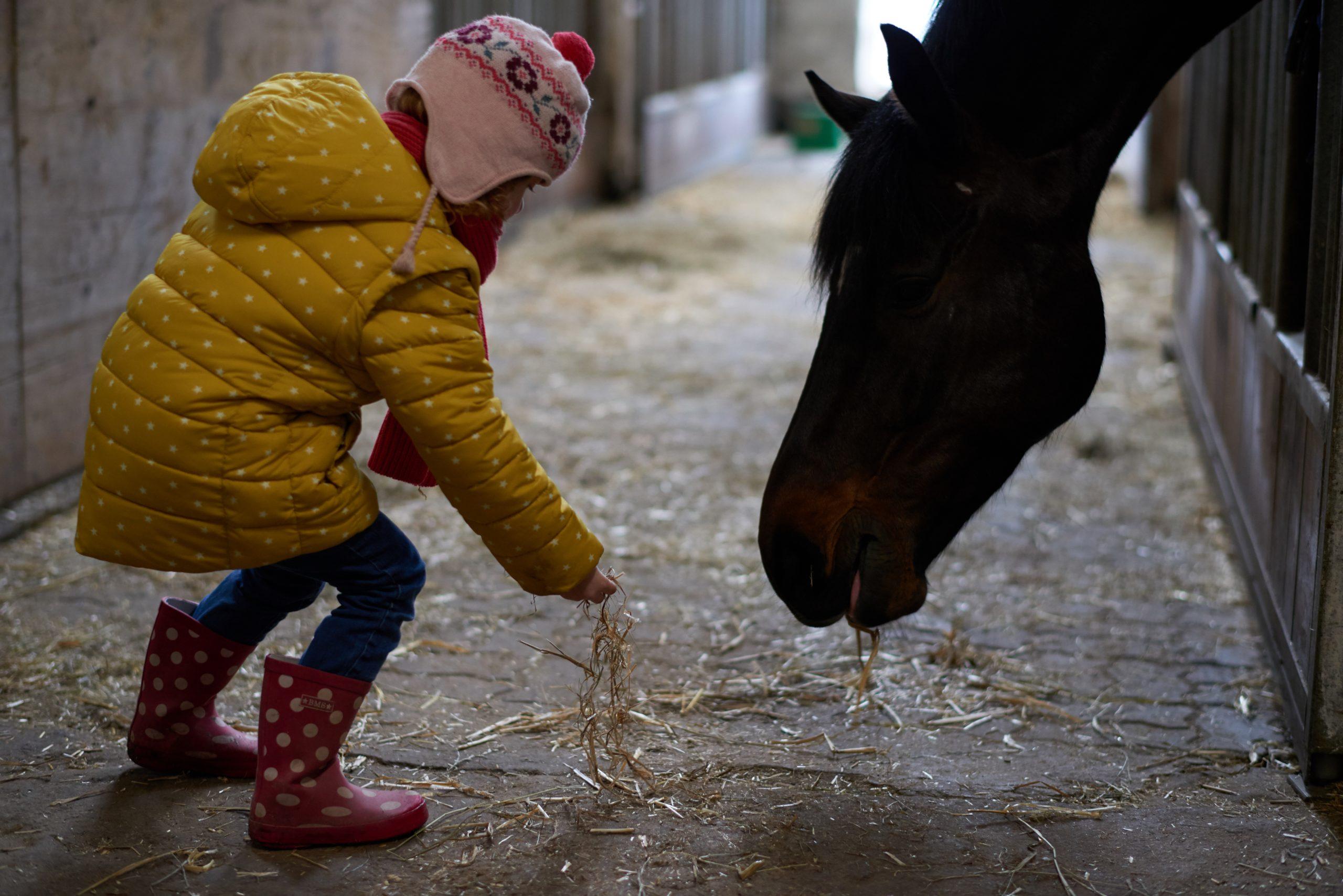 Gut Friederikenhof - vorsichtig die Pferde füttern