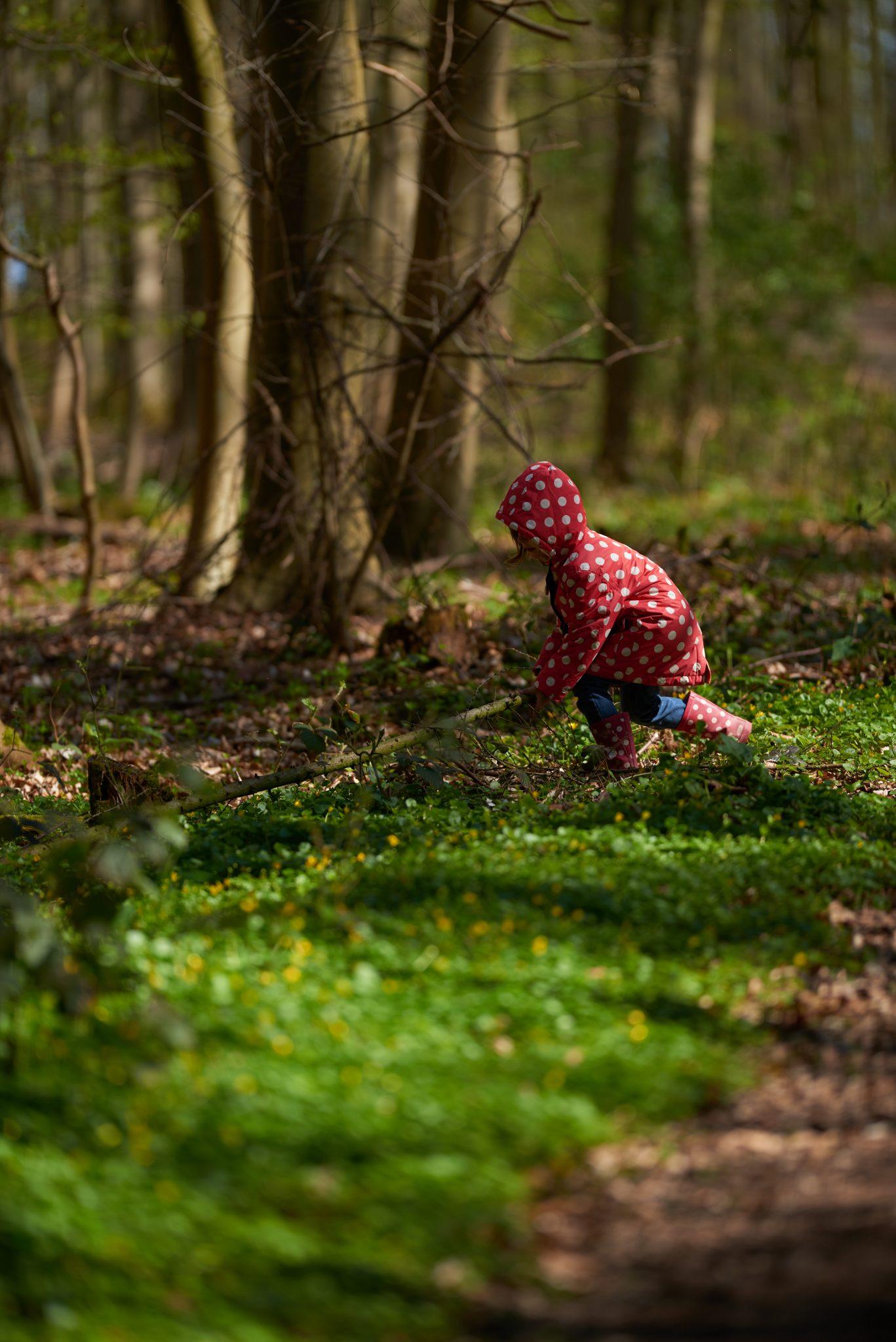 Gut Friederikenhof - den Wald entdecken