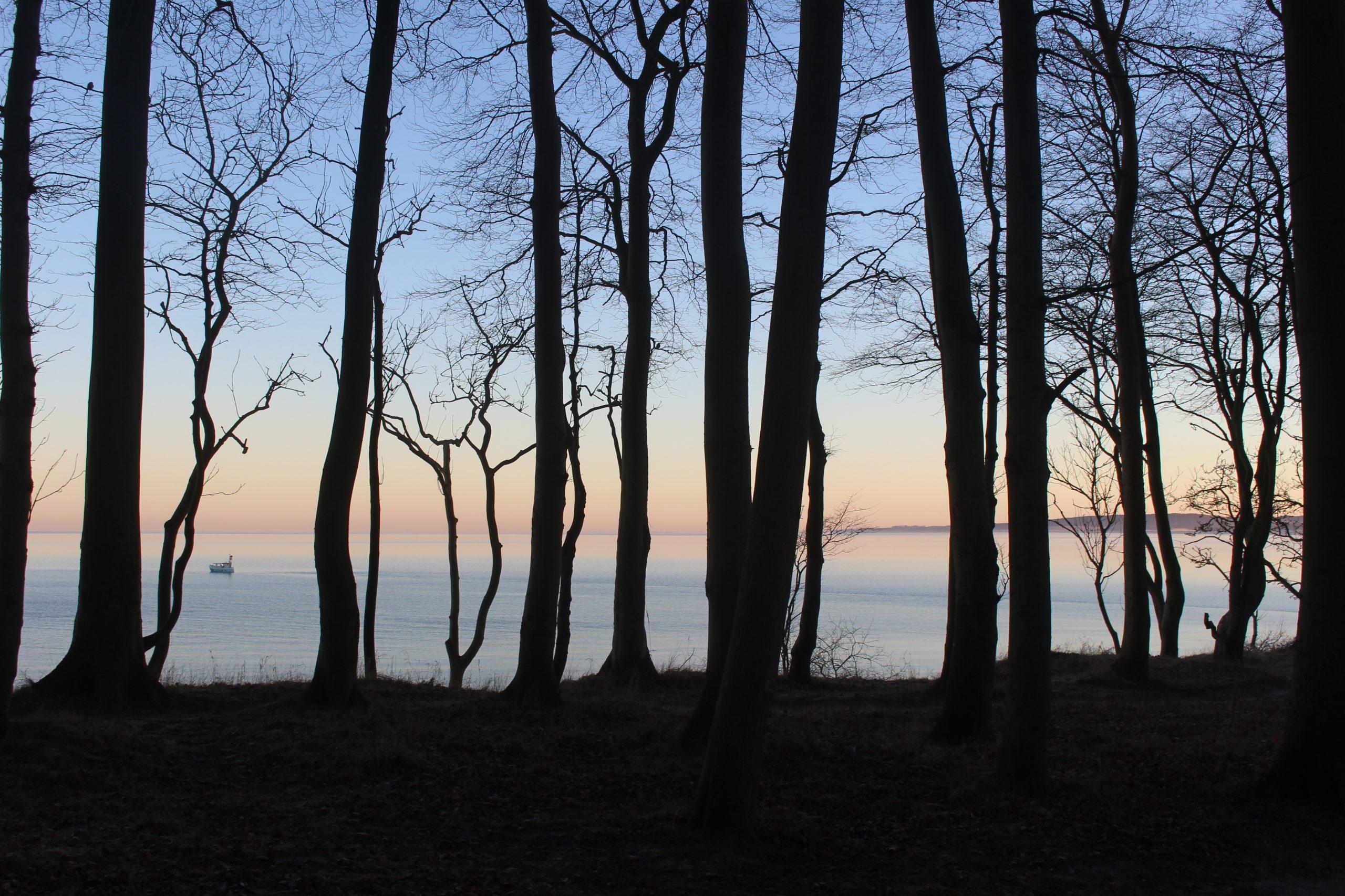 Gut Friederikenhof - Waldspaziergang entlang der Steilküste