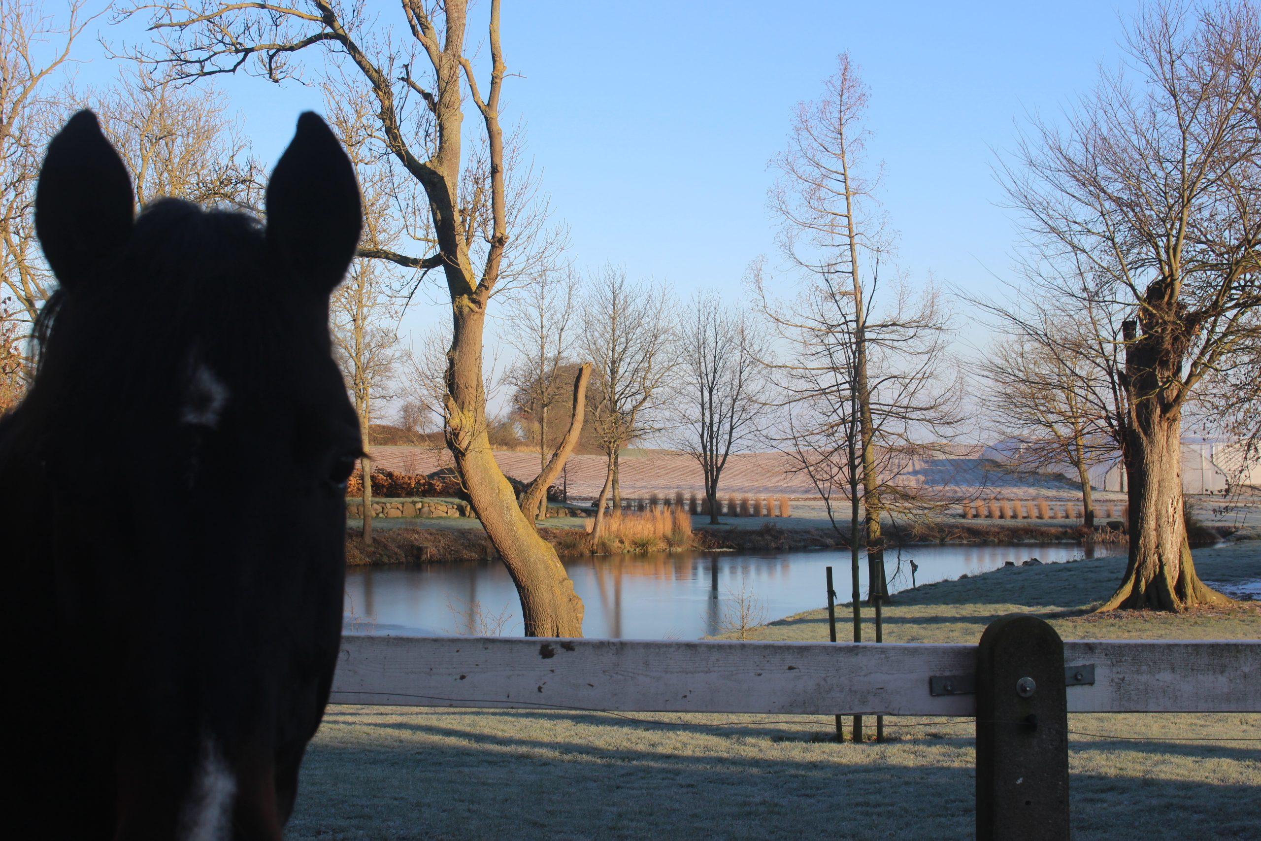 Gut Friederikenhof - unsere Pferde genießen den Ausblick