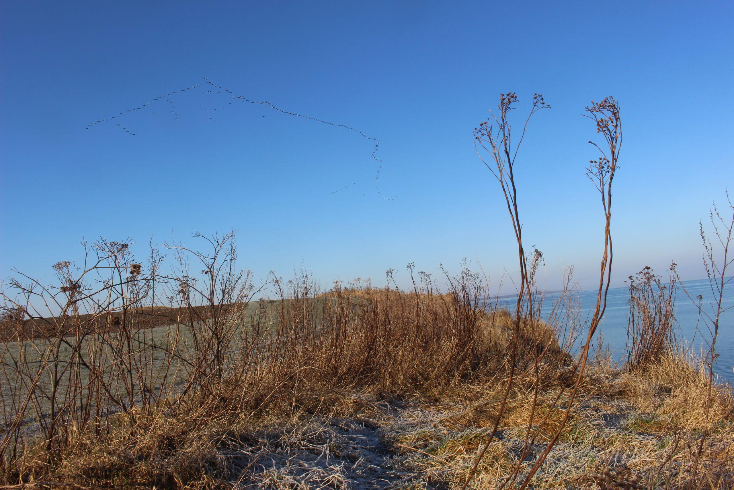 Gut Friederikenhof - die Natur oberhalb der Steilküste