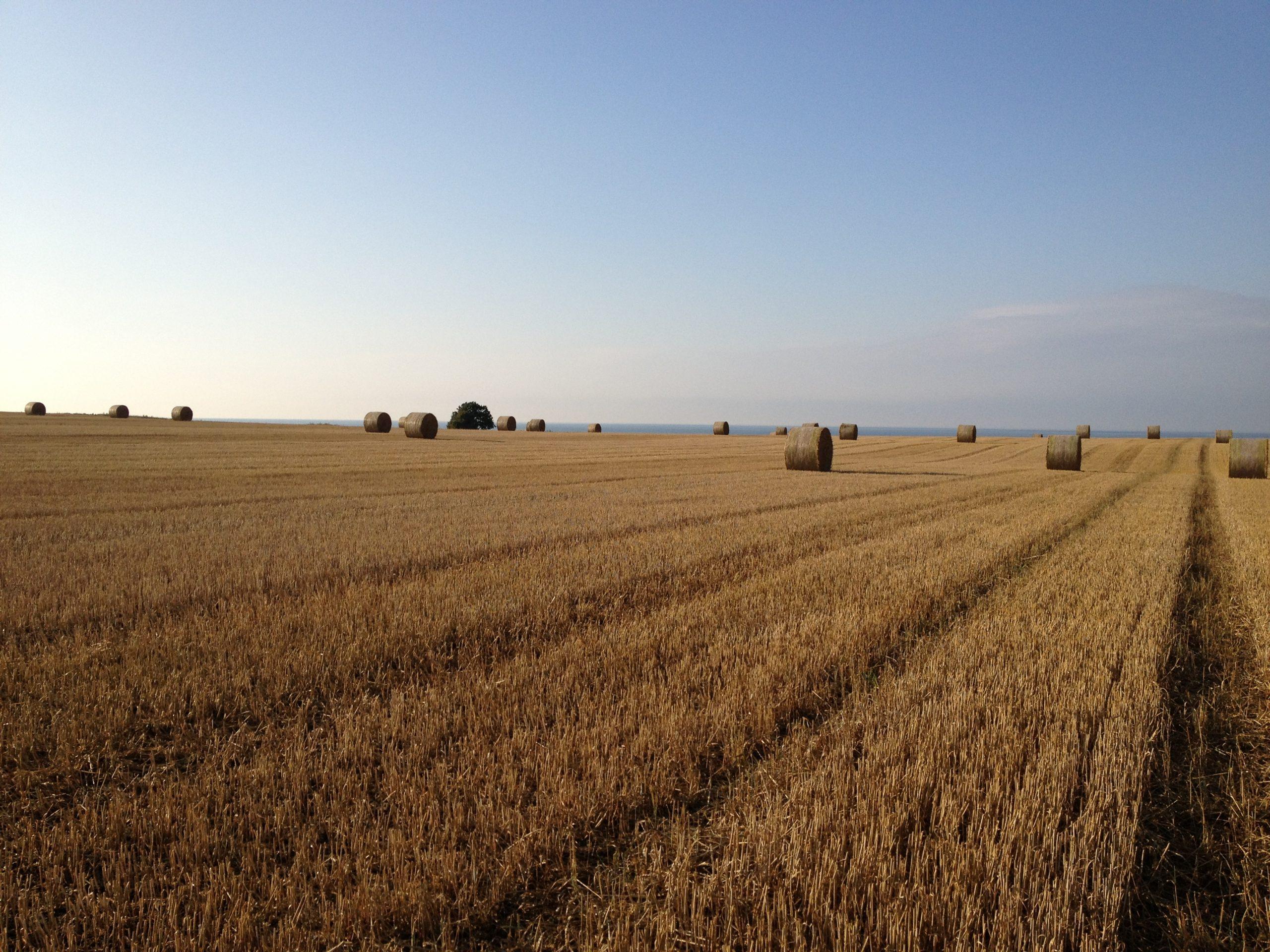 Gut Friederikenhof - die Ackerflächen rund um das Gut