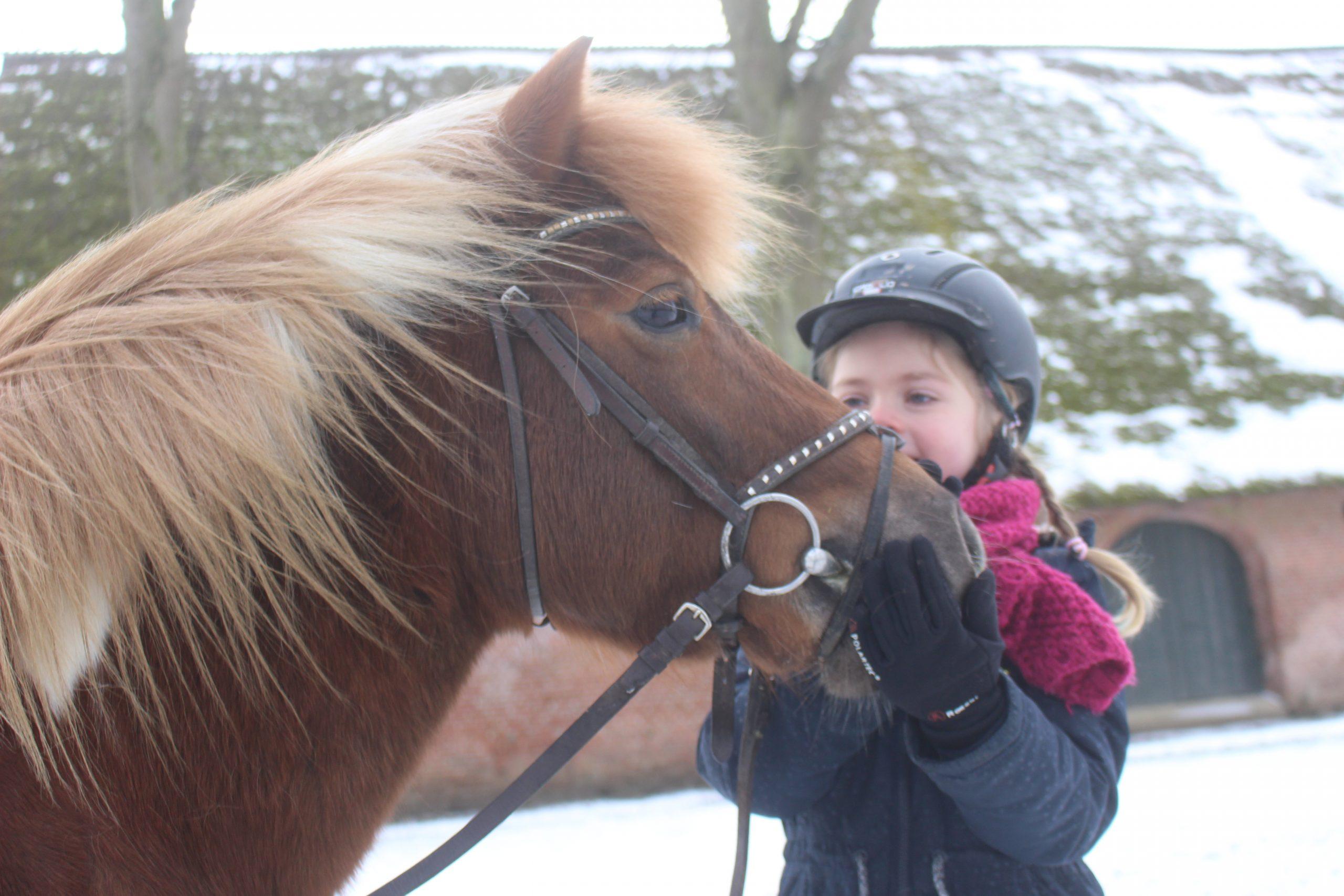 Gut Friederikenhof - Kuschelzeit mit unserem Pony Wolke